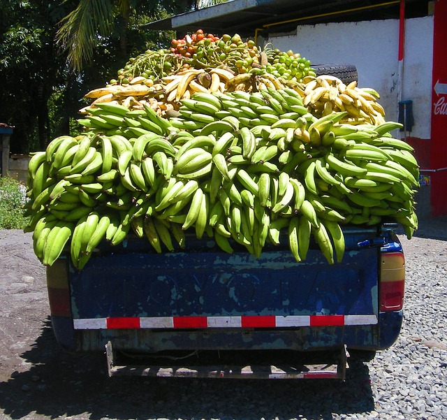 plantains are often sold from the back of trucks