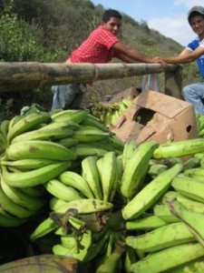boys selling plantains
