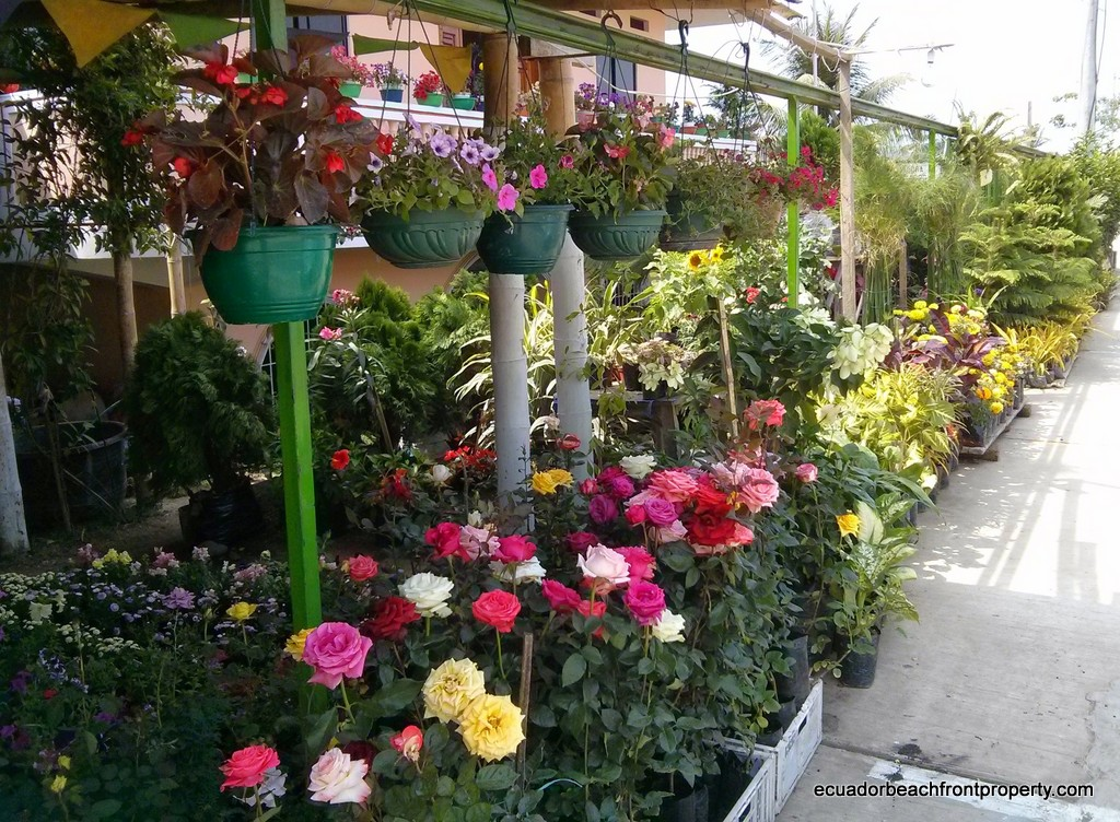 sosote nursery (1)