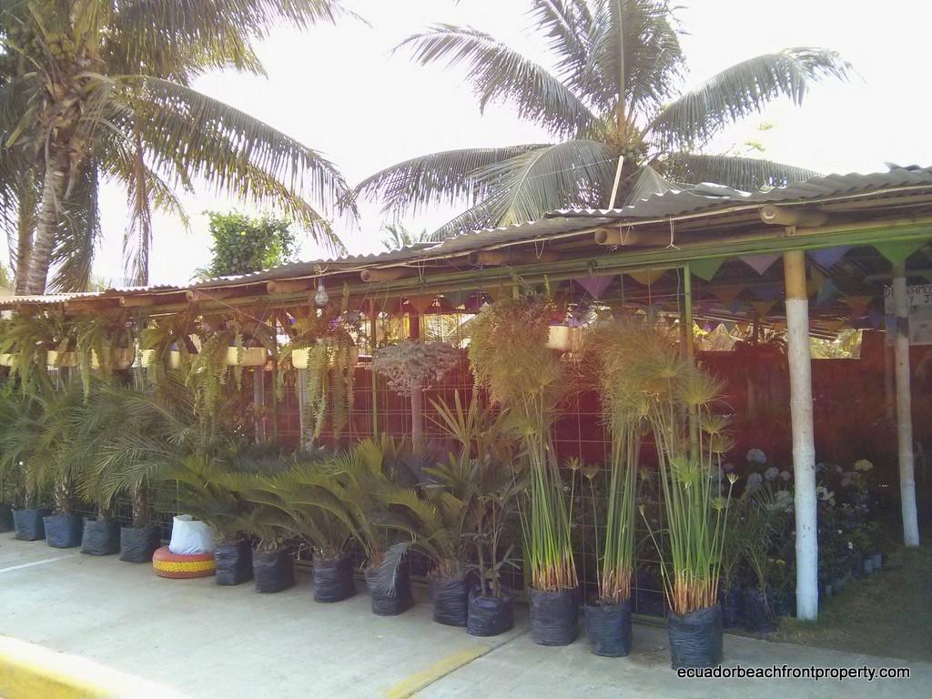 sosote nursery (2)