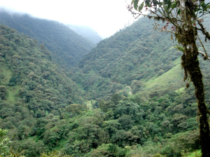Andean rainforests are part of the beauty of driving out of the mountains to the coast.